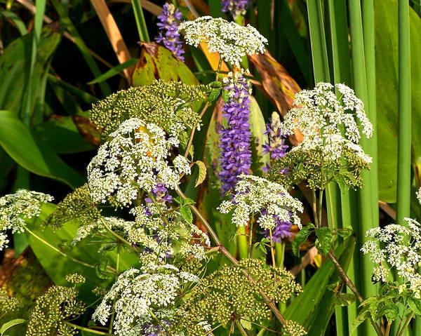 Photograph - Marsh Beauty by Peg Urban