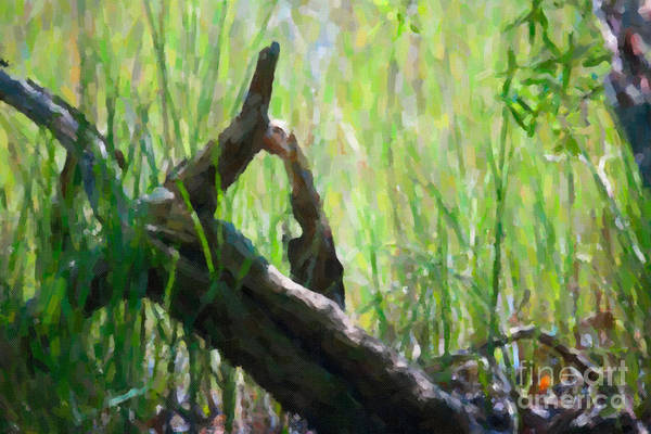 Photograph - Marsh Driftwood by Dale Powell