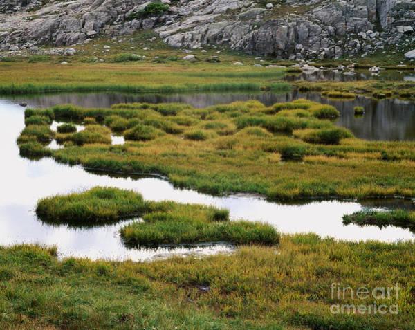 Wind River Range Wall Art - Photograph - Marsh In Titcomb Basin by Tracy Knauer