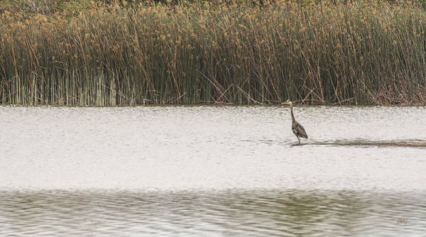 Photograph - Marsh Landscape With Heron by Ben and Raisa Gertsberg