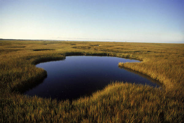 Wall Art - Photograph - Marsh On Cape Cod by Jose Azel