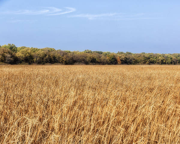 Photograph - Marsh Pelee Point Canada by Jack R Perry
