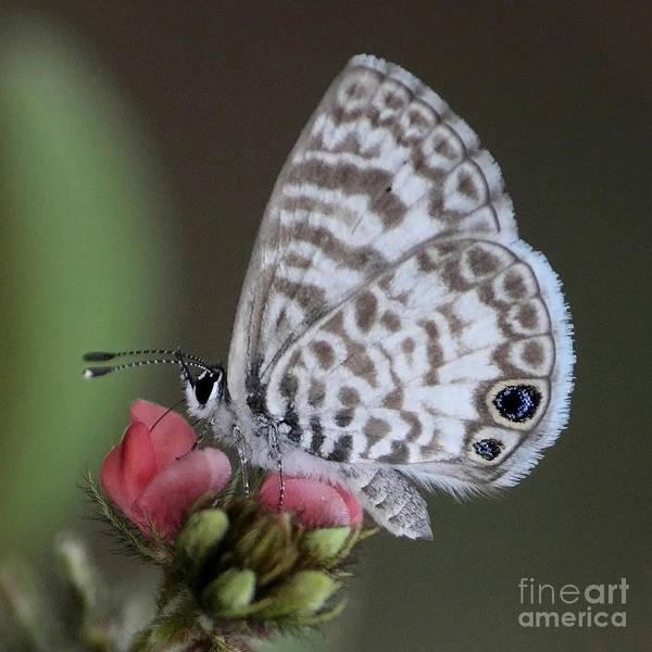 Photograph - Marsh Princess by Carol Groenen