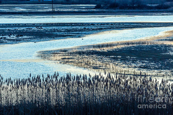 Photograph - Marsh Reeds by Susan Cole Kelly