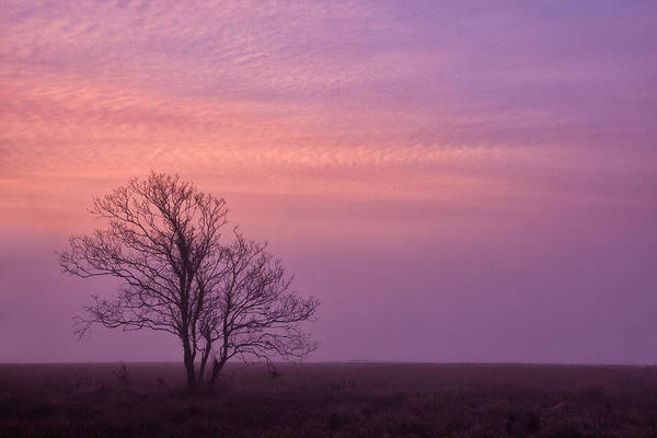 Photograph - Marsh Trail Tree by Denise Bush