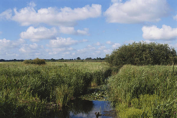 Biodiverse Wall Art - Photograph - Marshfen Biome by C.r. Sharp
