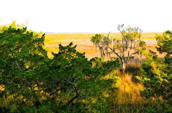 Photograph - Georgia Coastal Marsh And Cedar Tree by Ginger Wakem