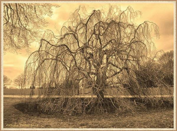 Photograph - Marvelous Tree At Longwood Gardens by Victoria Porter