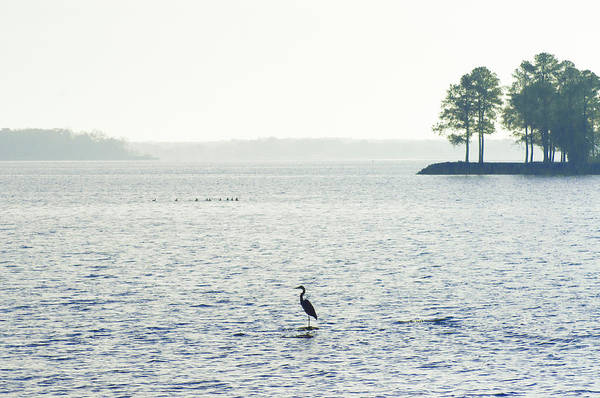 Herron Photograph - Maryland's Chesapeake Bay by Bill Cannon