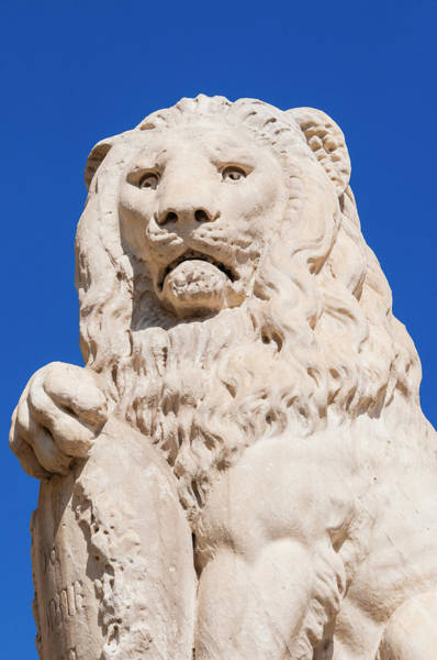 Marzocco Lion, Piazza Santa Croce Art Print