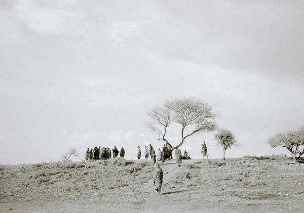 Photograph - Iconic Africa by Shaun Higson