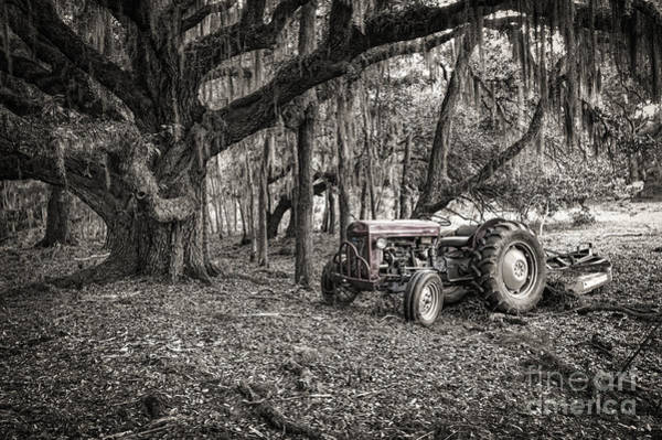 Photograph - Massey Ferguson And The Oak by Scott Hansen