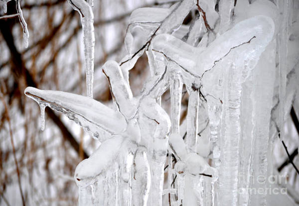 Photograph - Massive Icicles by Staci Bigelow