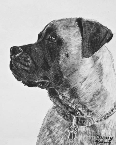 Drawing - Mastiff In Profile by Kate Sumners