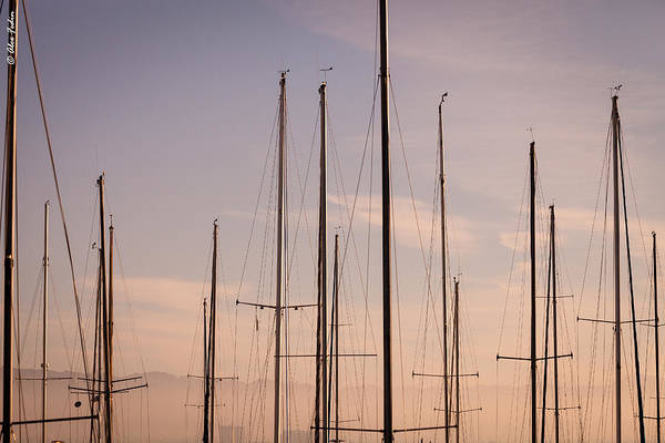 Photograph - Masts by Alexander Fedin