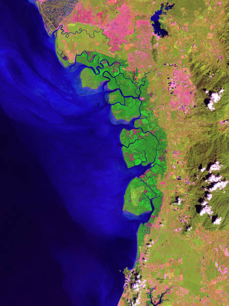 Ir Photograph - Matang Mangrove Forest by Nasa/usgs/science Photo Library
