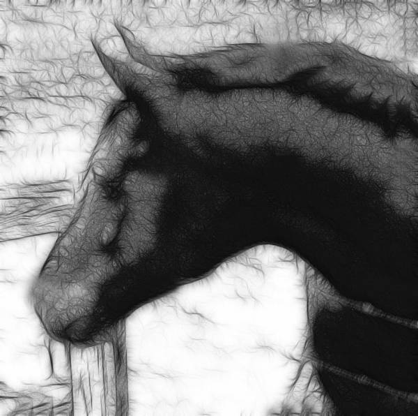 Photograph - Matt Horse Abstract-bw by Lesa Fine