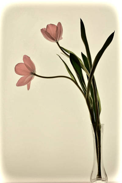 Mauve Tulips In Glass Vase Art Print