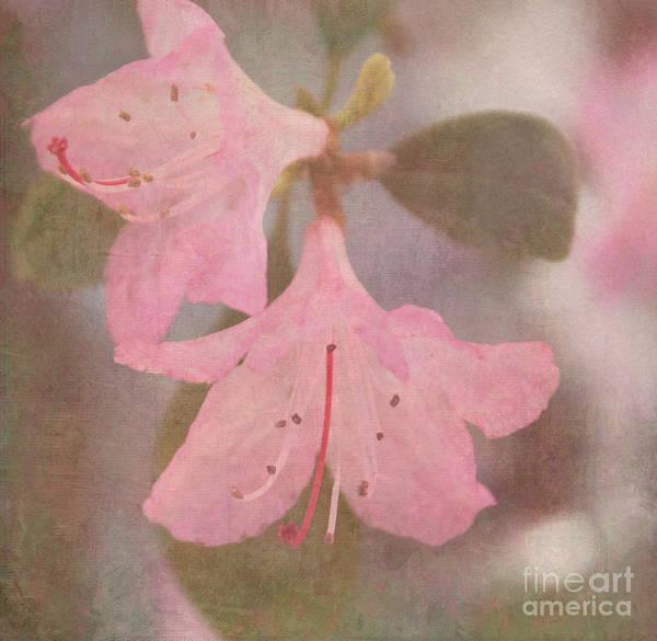 Azalia Photograph - May Flowers by Arlene Carmel