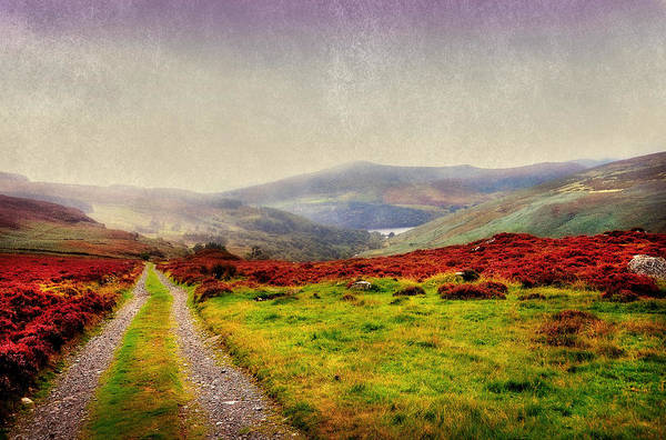 Green Grass Photograph - May It Be Your Journey On. Wicklow Mountains. Ireland by Jenny Rainbow
