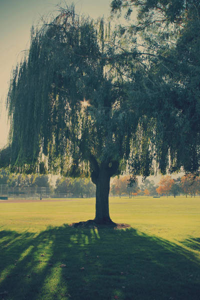 Weeping Willow Wall Art - Photograph - Maybe We'll Find It Someday by Laurie Search