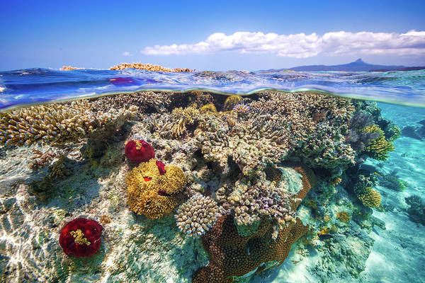 Paradise Photograph - Mayotte : The Reef by Barathieu Gabriel