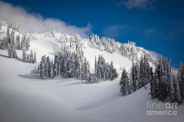 Photograph - Mazama Ridge by Inge Johnsson