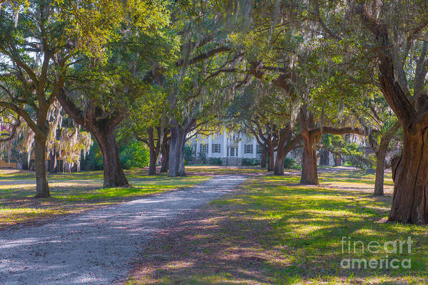 Photograph - Mcleod Plantation by Dale Powell