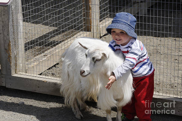 Petting Zoo Photograph - Me And My Goat by Colin Woods