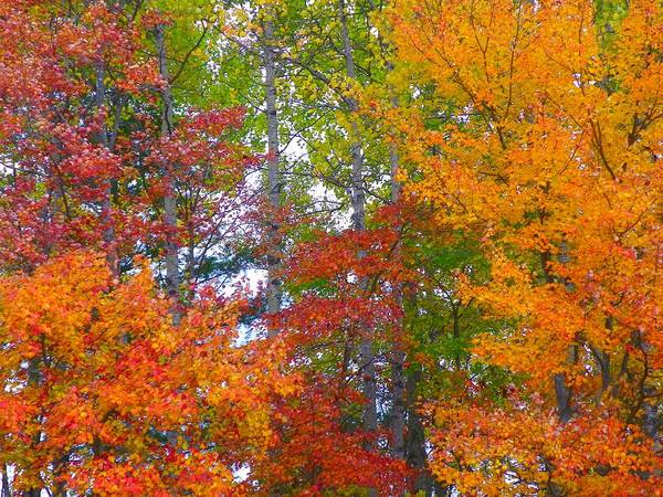 Houlton Photograph - Me Autumn Colors by Gene Cyr