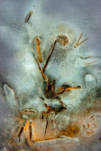 Photograph - Meade Ice Abstract by Tom Cameron