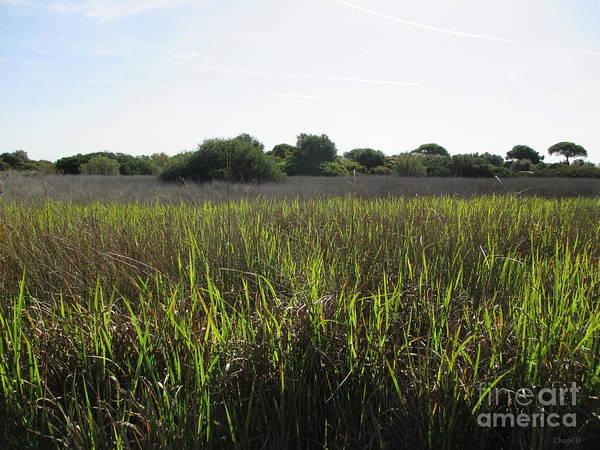 Photograph - Meadow Near El Puerto De Santa Maria by Chani Demuijlder
