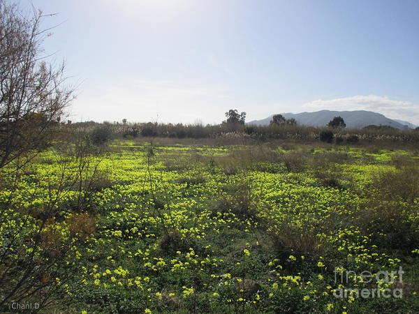 Photograph - Meadow Near Malaga by Chani Demuijlder