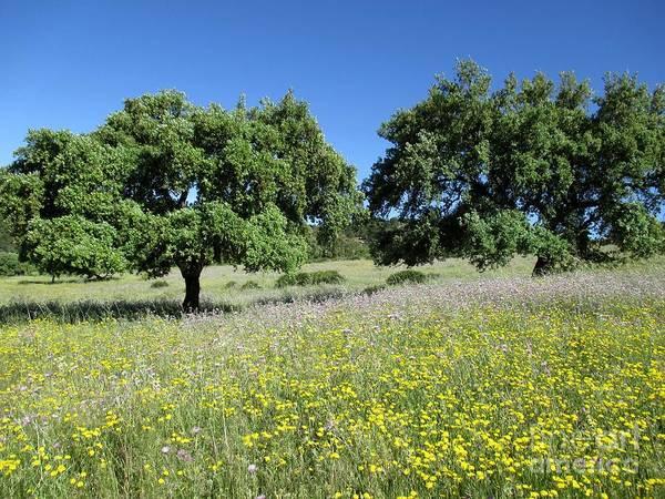 Photograph - Meadow Near Nerva by Chani Demuijlder