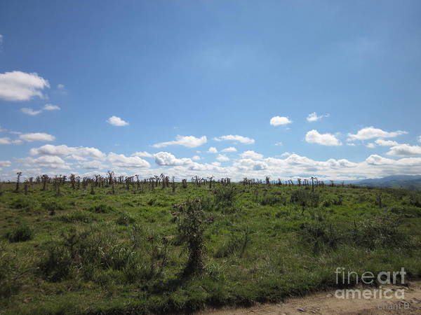 Photograph - Meadow Near Ostabat by Chani Demuijlder