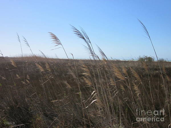 Photograph - Meadow Near Roquetas De Mar by Chani Demuijlder