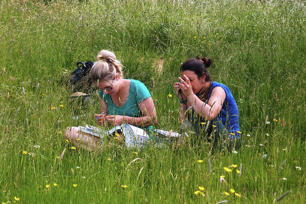 Botanic Photograph - Meadow Plant Identification by Botanic Garden/oxford University Images