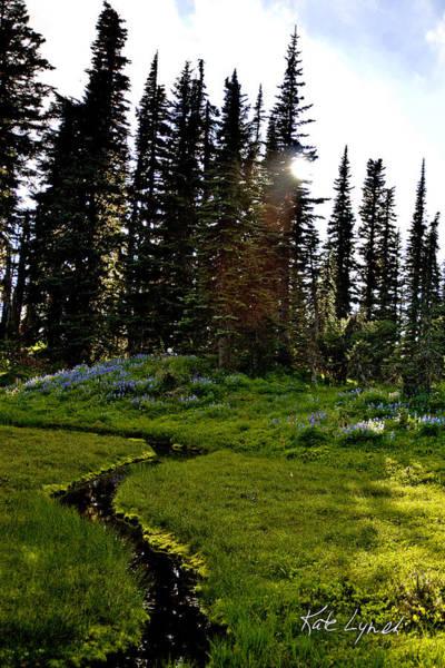 Photograph - Meadow Splendor by Kate Lynch