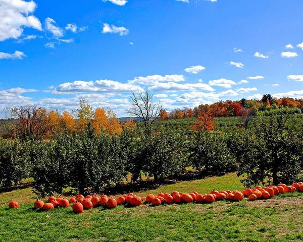 Meadowbrook Photograph - Meadowbrook Farm Orchard In Autumn by Michael Saunders