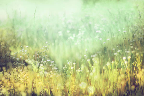 Impressionist Photograph - Meadowland by Amy Tyler
