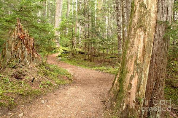 Photograph - Meandering Along Cheakamus Lake by Adam Jewell