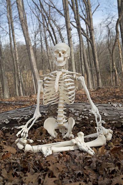Skeletal System Photograph - Meditative Moods Color by Betsy Knapp