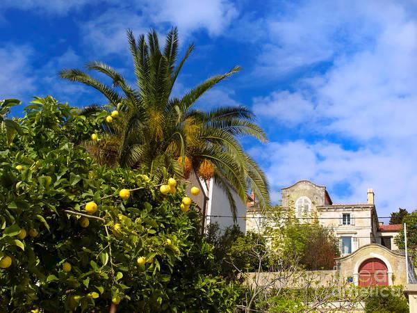 Losinj Photograph - Mediterranean by Sinisa Botas