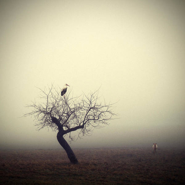 Surreal Landscape Wall Art - Photograph - Meeting In The Morning by Holger Droste