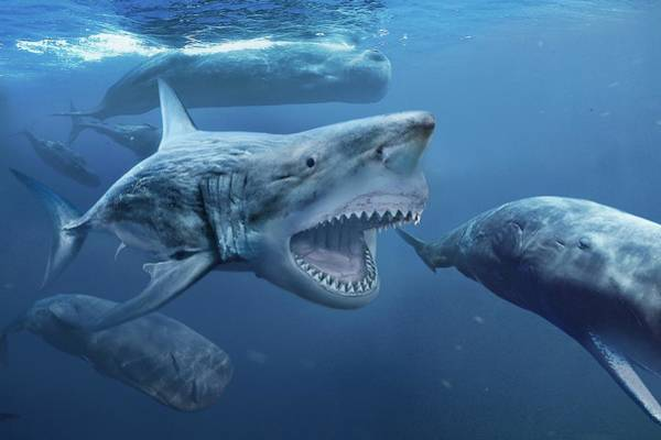 Wall Art - Photograph - Megalodon by Roman Uchytel/science Photo Library