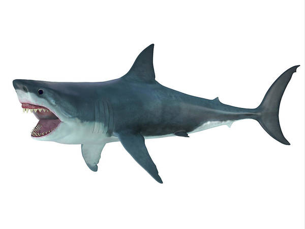 Wall Art - Photograph - Megalodon Shark, Side Profile by Corey Ford