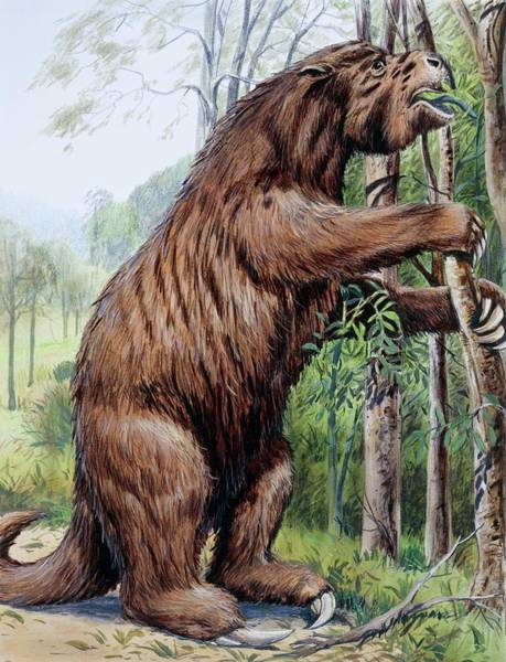 Wall Art - Photograph - Megatherium by Michael Long/science Photo Library
