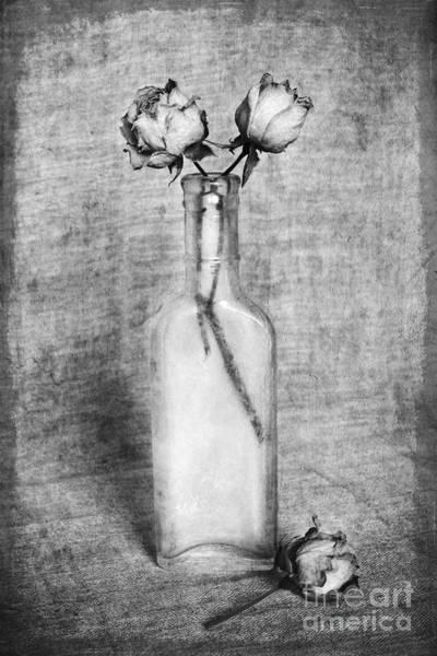 Photograph - Melancholy Roses by Elena Nosyreva
