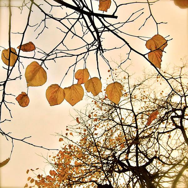 Photograph - Mellow Touch by HweeYen Ong