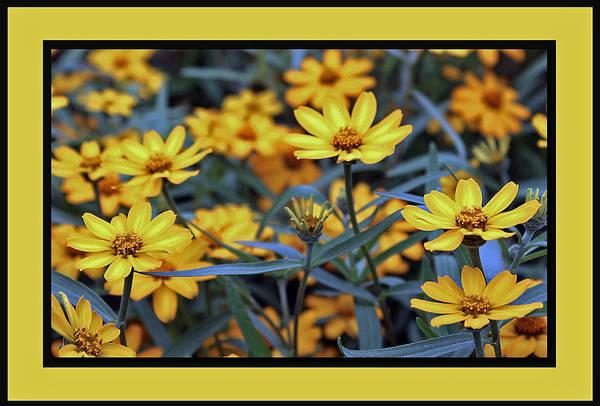 Manito Park Spokane Photograph - Mellow Yellows by Ellen Tully